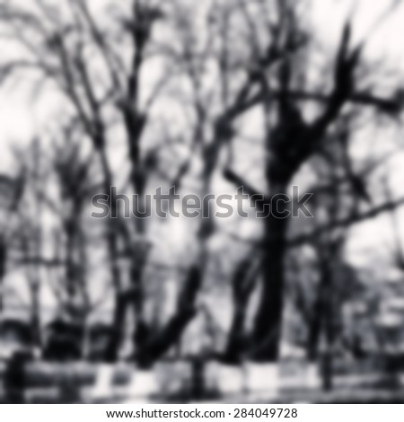 Monochrome black and white forest wood photo blurred background - stock photo