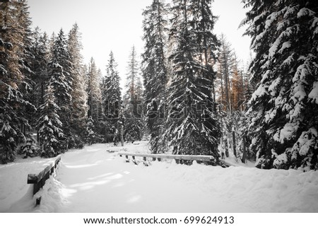 Monochrome forest full of snow