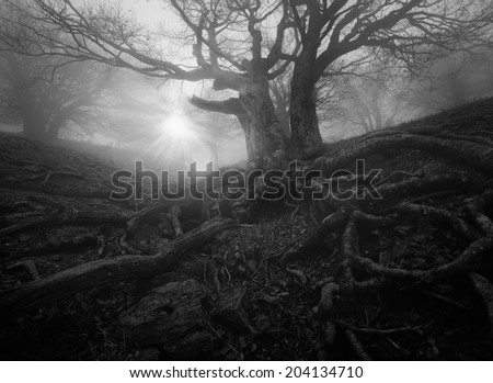 monochrome forest landscape - stock photo
