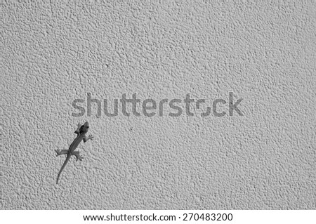 monochrome house lizard on the wall - stock photo