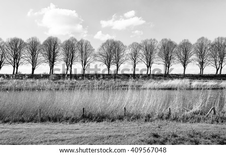 Monochrome image of a canal with waving reeds on the banks and a row of bare trees in the background in the beginning of the spring season. - stock photo