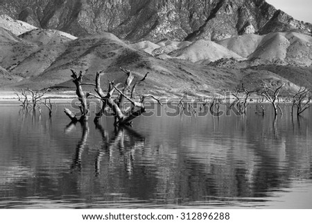 Monochrome image of dead trees stick up on top of water in dry reservoir in California