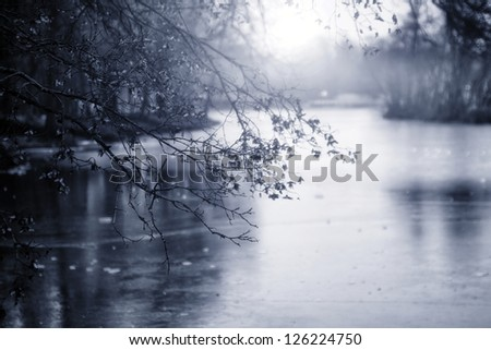 Monochrome photograph of  branch in winter - stock photo