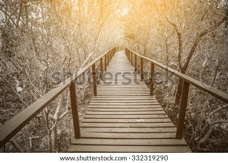 Monochrome style of the wooden bridge in mangrove forest whit sun ray.