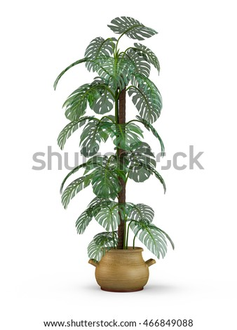 Monstera plant in a pot isolated on white background. 3D Rendering, Illustration.
