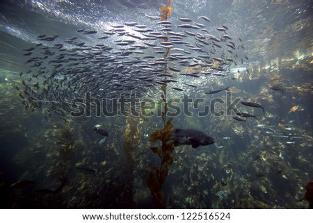 Monterey Aquarium - stock photo