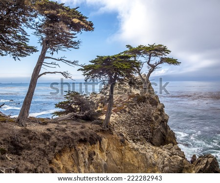 MONTEREY, CALIFORNIA - SEP 21, 2014: Lone Cypress tree view along famous 17 Mile Drive in Monterey. Sources claim it is one of the most photographed trees in North America.