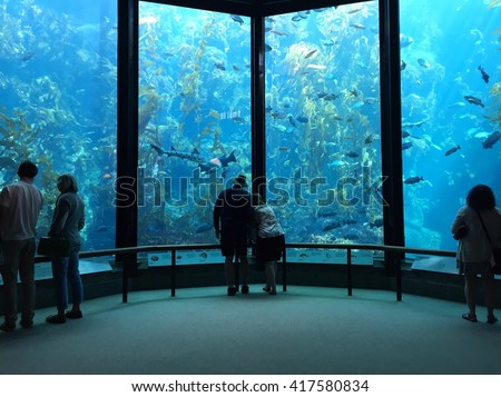 MONTEREY - MARCH 2: Visitors view fish in the Kelp Forest tank at The Monterey Bay Aquarium the on March 2, 2016 in Monterey, California, USA. - stock photo