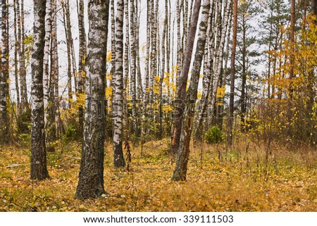 Month November . Autumn in the forest with yellow leaves