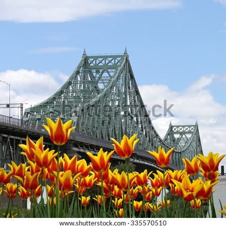 Montreal Jacques-Cartier bridge with yellow tulips on front - stock photo