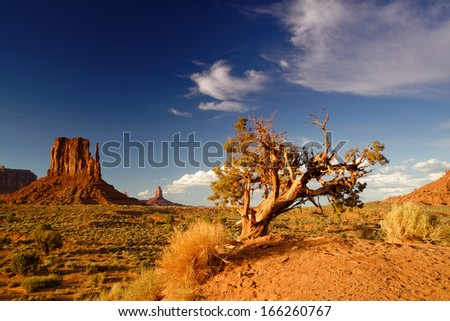 Monument Valley Lone Juniper and West Mitten.