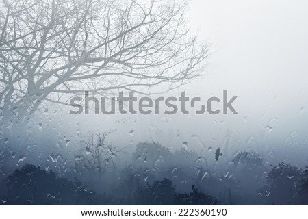 Moody grey fall background - trees in fog, rainy day, foggy day, raindrops flowing on window, depression from fall weather - stock photo
