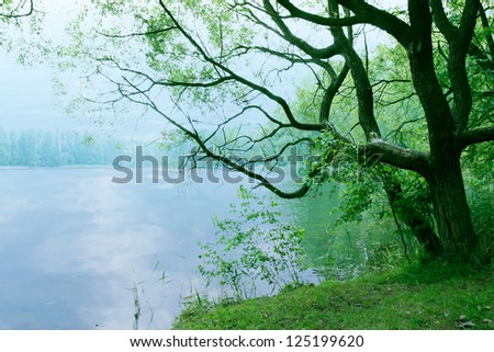 moody landscape calm water with old tree and lake in the morning as nature background wallpaper scenery - stock photo