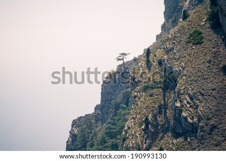 Moody Landscape with lonely tree on rocky mountains film effects colors - stock photo