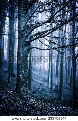 Moody landscape with scary forest at night - stock photo