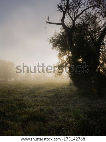 Moody rural sunrise with ground fog and water on grass - stock photo