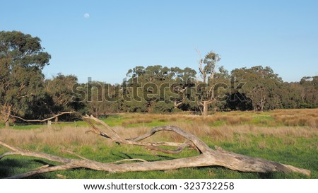 Moon over a fallen tree at a vacated farmland paddock surrounded by bush land under blue sky countryside Victoria, Australia 2015 - stock photo