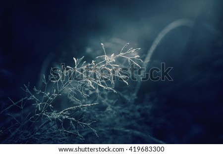 Moonlight winter misty night. Snow and frost on grass - stock photo