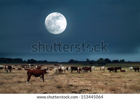 Moonrise over farmland - stock photo