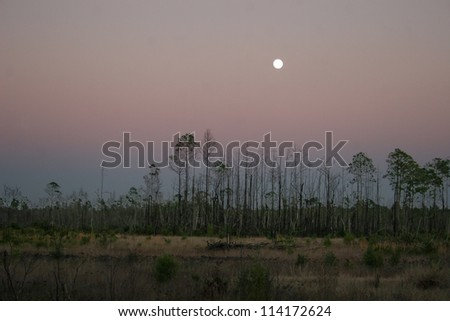 moonrise over forest - stock photo