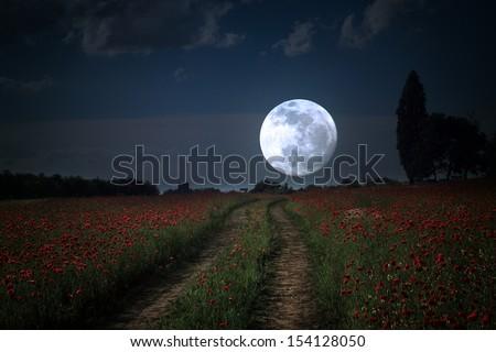 Moonrise over wild flower field - stock photo