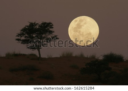 Moonrise South Africa - stock photo