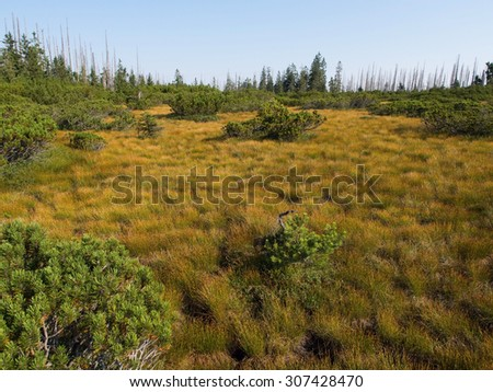 Moorland - stock photo