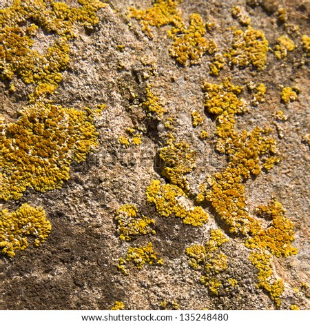 Moos stone texture or background - stock photo