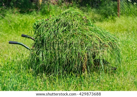 mop of green fresh cut grass in a wheelbarrow on a blurred background in sunny day. Candid selective focus image.