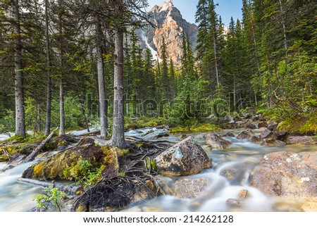 moraine lake brook in the woods at banff canada - stock photo