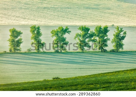 Moravian rolling landscape with trees in early morning haze. Moravia, Czech Republic - stock photo