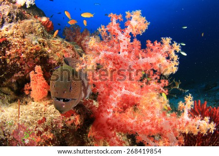 Moray Eel and coral - stock photo