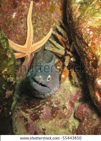 Moray Eel , starfish, and sea urchin in Baja Mexico - stock photo