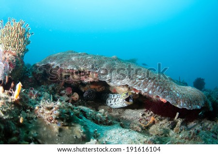 Moray eels - stock photo