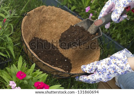 more potting soil a gardener is adding more potting soil into coco lined hanging basket. preparing for flowers. - stock photo