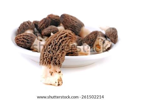 Morel, Morchella Conica or Black Morel Mushroom isolated on white - stock photo