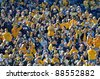 MORGANTOWN, WV - NOVEMBER 5: West Virginia University Mountaineer football fans look on from the crowded stands during the football game between Louisville and WVU November 5, 2011 in Morgantown, WV. - stock photo