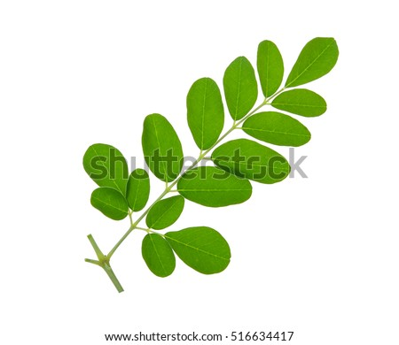 background of the study of malunggay tea Vi parada, valenzuela city chapter 1 problem and it's background this chapter   malunggay leaves may be eaten as greens , in salads and as vegetable   significance of study: the result of the study will provide ready and.