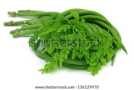 Moringa Oleifera or sonjna with fresh leaves - stock photo