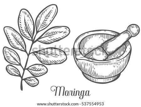 Moringa Plant Leaf Mortar Pestle Moringa Stock Illustration ...