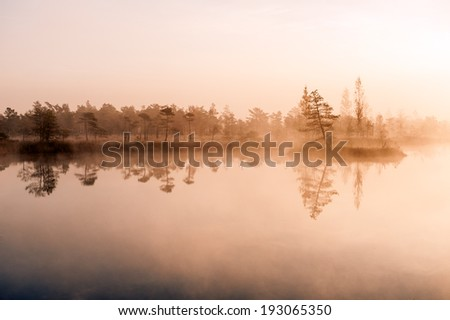 Morning at swamp - stock photo
