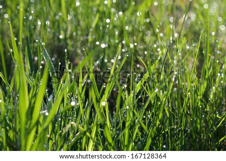 Morning Dew - stock photo