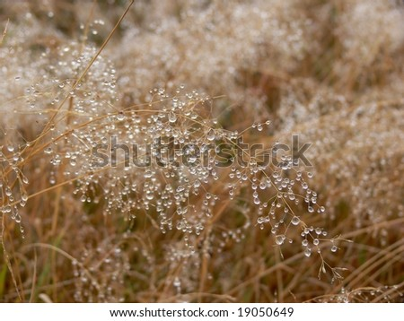 Morning dew drops background - stock photo