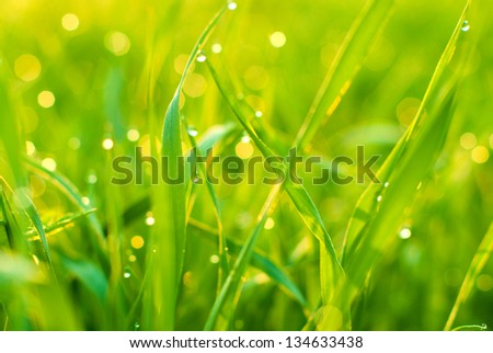 Morning dew in the young green grass - stock photo