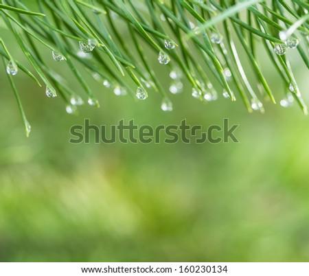 Morning dew nature background - stock photo
