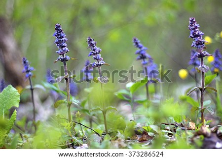 Morning dew on grass with purple flower, beautiful nature background with shallow depth of field - stock photo