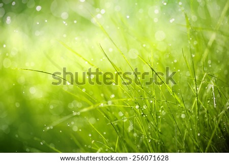 Morning dew on spring grass,Shallow Dof. - stock photo