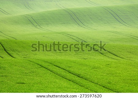 Morning dew on the field waves, South Moravia, Czech Republic - stock photo