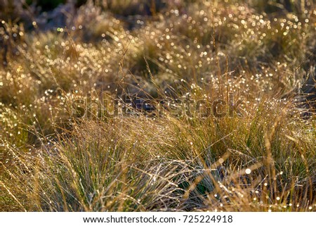 Morning dew on the grass. Autumn. Nature background.