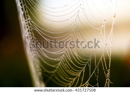 Morning dew. Shining water drops on spiderweb. Hight contrast image. - stock photo